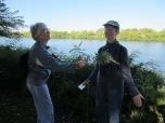 Mugwort can cleanse energy