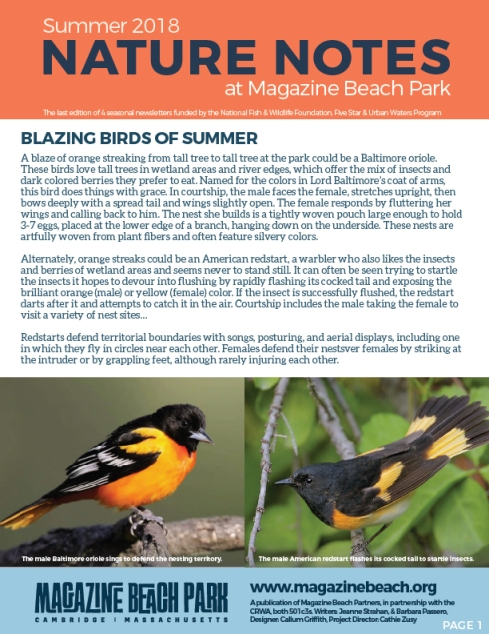 LOW RES MB Summer Newsletter-01